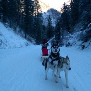 Sled, dogs, huskies, winter, snow, crash, mountains.